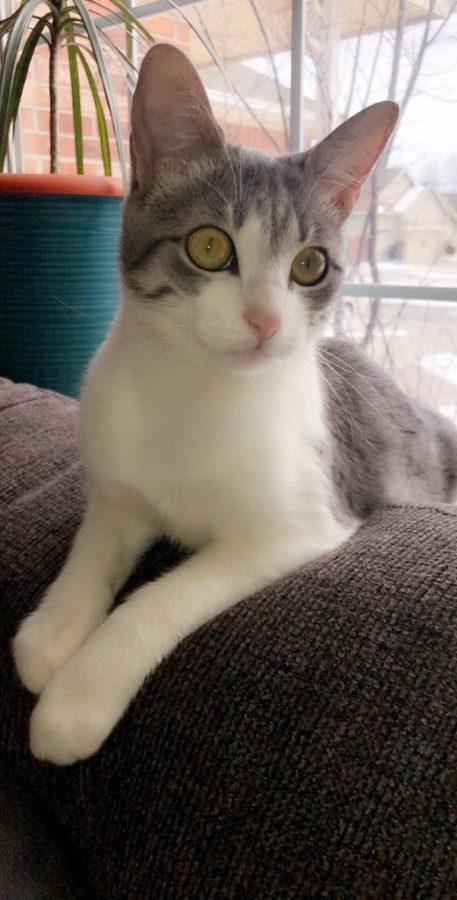 Fat Cat // Owner: Nataleigh Cantu