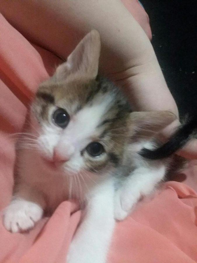 Cat Ciel // Owner: Mistyanna Galloway