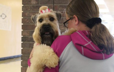 Therapy dogs improve the environment