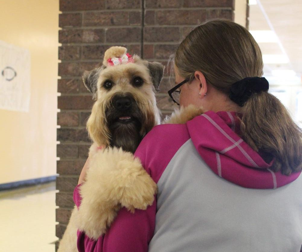 """Freshman Riley Athy-Sedbrook receives a hug from Jeni, one of the therapy dogs. Jeni has officially been visiting the school for three years. """"You can't count the ways that the dogs make a difference,"""" Deb Houlderman said."""